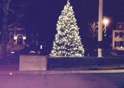Our Tree in Concord, Mass Town Center