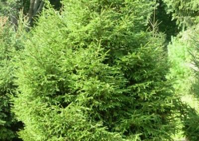 treefarm-1