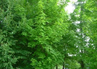 treefarm-2