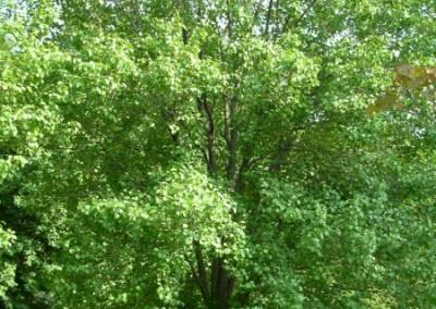 treefarm-3