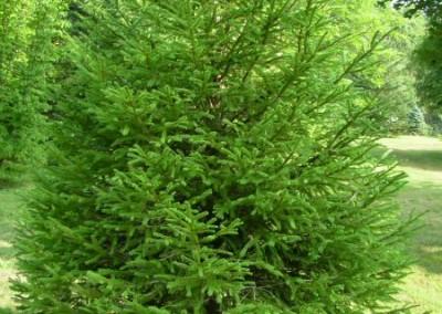 treefarm-4
