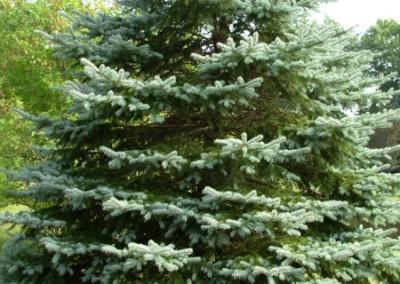 treefarm-5