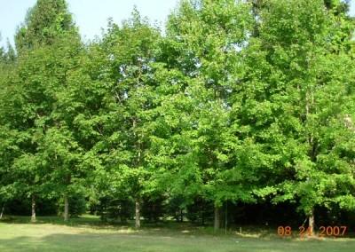 treefarm-6