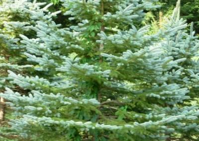 treefarm-7